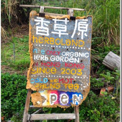 南丫島 香草原